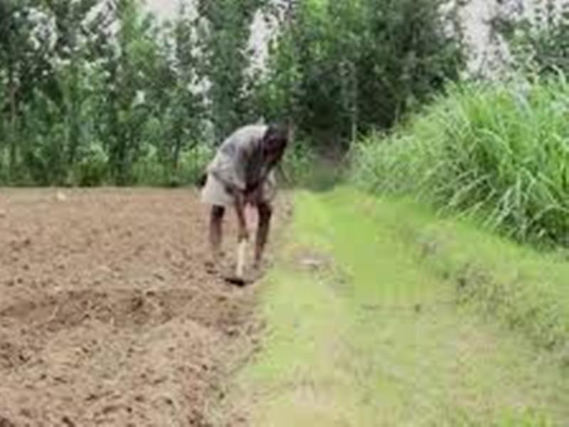Budget 2020 Proposal : किसानों की आय बढ़ाना होगा सरकार का प्रमुख एजेंडा