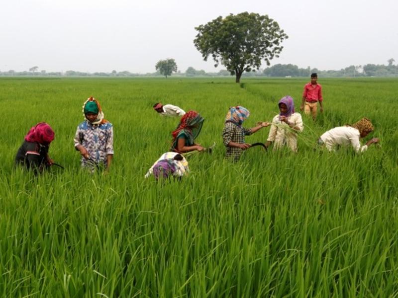 एक करोड़ किसानों को किसान क्रेडिट कार्ड देना चाहते हैं पीएम मोदी, यह है योजना