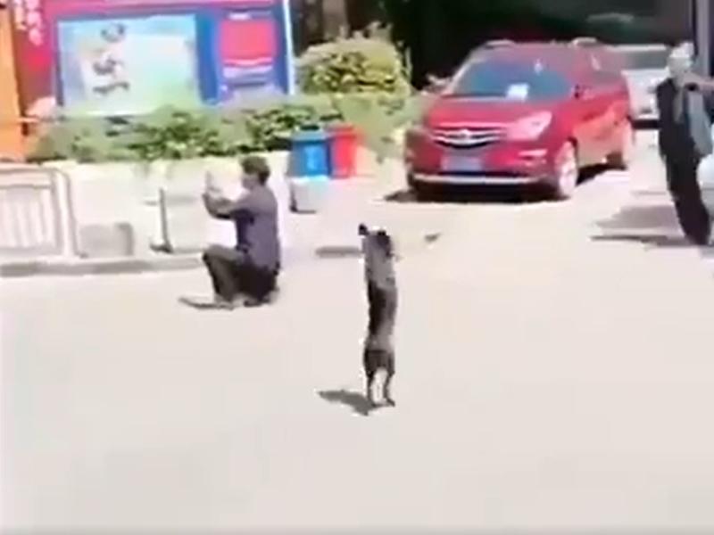 दो पैरों वाले कुत्ते का सड़क पार करते वीडियो वायरल, यूजर्स ने कहा ये है 'Winner'