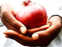 महंगा हो या सस्ता... Onion रोज खाने के में होना ही चाहिए, 5 फायदों की ये रही लिस्ट