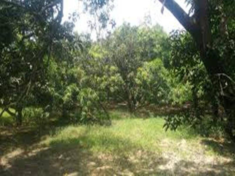 Corona virus effect in Chhattisgarh : गांव की मुख्य सड़क पर पेड़ की डालियों से ग्रामीणों ने किया लॉक डाउन