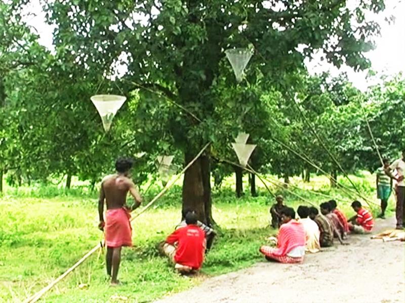 Coronavirus in Chhattisgarh : बीजापुर में तेलंगाना से लौटे 7 आदिवासियों की मौत