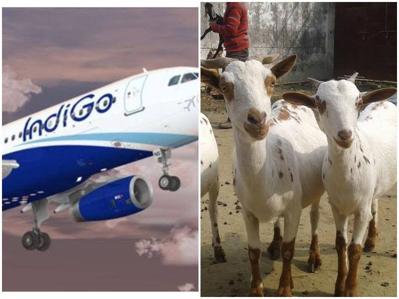 बकरियां बेचकर विमान का टिकट खरीदा, कैंसिल हो गई फ्लाइट, Indigo ने ऐसे की मदद