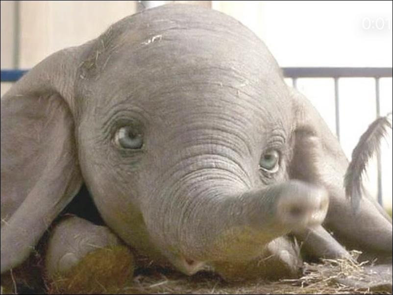 नन्हे हाथी की खूबसूरत आंखों के लिए अधिकारी ने सोशल मीडिया पर पूछा कैप्शन, यूजर्स ने दिए रोचक जवाब
