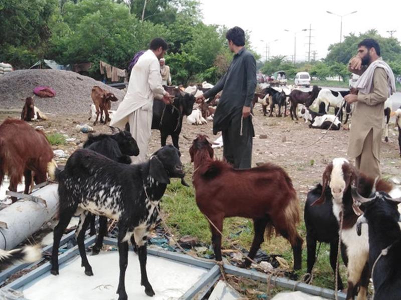 पाकिस्तान में ईद से पहले गाड़ियों की धुलाई की दुकानों पर हो रही है जानवरों की डीप क्लीनिंग