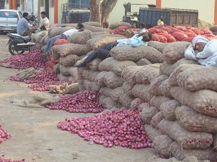 Onion Price : प्याज के भाव कम मिलने से मायूस हो गए किसान