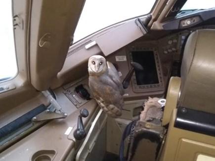 Jet Airways के प्लेन में मिला उल्लू, कर्मचारियों में सेल्फी की मची होड़