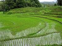 यहां गांवों में खौफ का माहौल, धान की खुशबू के कारण बढ़ा ऐसा खतरा