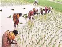 अपर कलेक्टर के एक आदेश से गफलत में फंसे किसान, धान की खरीदी होगी प्रभावित