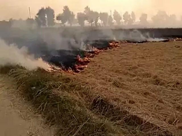 NGT ने पराली जलाने के खिलाफ उठाए गए कदमों की कृषि मंत्रालय से मांगी जानकारी