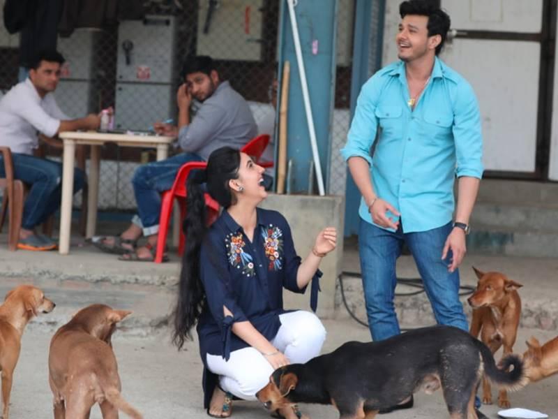'पटियाला बेब्स' का सेट है 17 कुत्तों का घर, क्रू करता है उनके खाने-पीने का इंतजाम