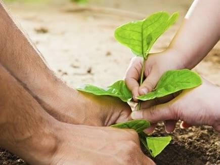पौधे लगाकर इस तरह पैसे कमा सकते हैं लोग