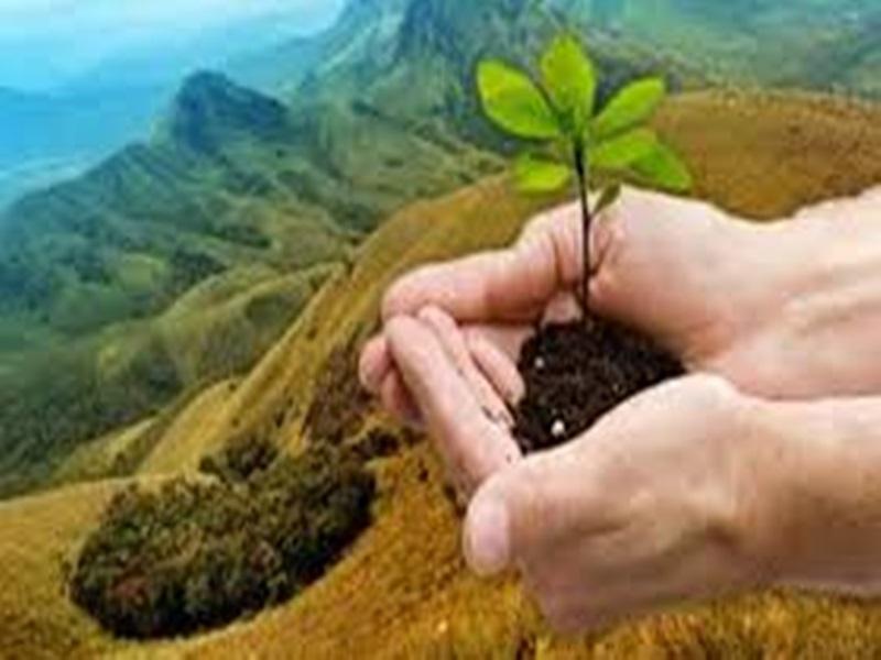 अनोखी पहल: स्कूल में एडमिशन के समय छात्रों को लगाने होंगे पौधे