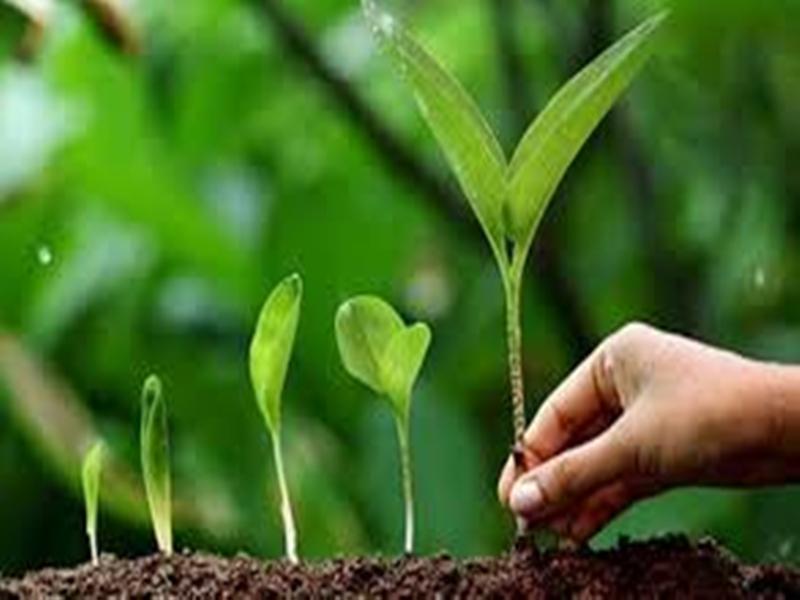 Plantation in  Chhattisgarh schools : स्कूलों में बच्चे लगाएंगे पौधे, बड़े होने तक करेंगे देखभाल