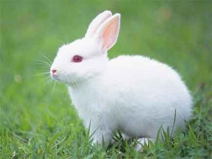 Forest department team caught hunter of rabbits in forest area