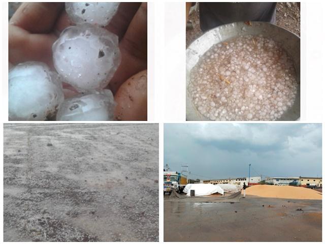 Rain in Madhya Pradesh: बिजली गिरने से मध्य प्रदेश में 4 की मौत, खुले में रखा गेहूं भीगा