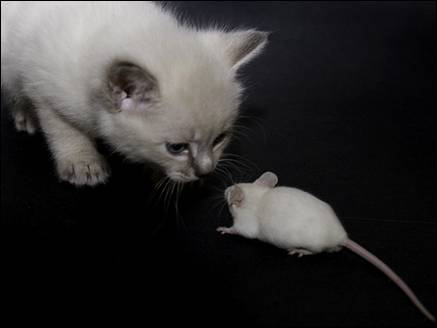 rat and cat story in hindi