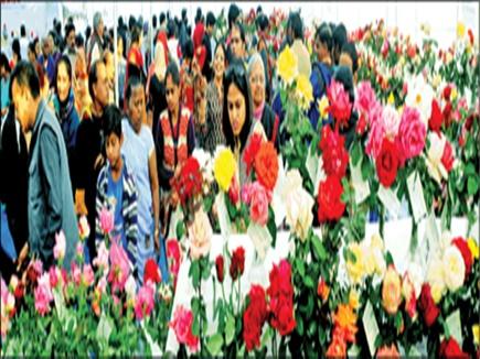 Rose exhibition: 7 हजार गुलाब के फूल शामिल, ये वैराइटी बनी किंग ऑफ द शो