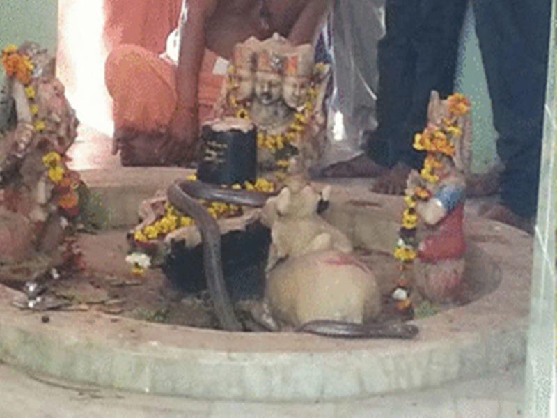 रोजाना 5 घंटों तक भगवान शिव के पास बैठा रहता है सांप, बंद रहते हैं मंदिर के दरवाजे