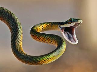 snake-bite-cg-eight 2014722 153726 22 07 2014
