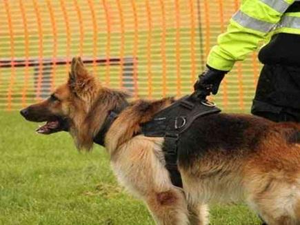 VIP ड्यूटी में लगे खोजी कुत्ते, ट्रेनिंग के बाद भी इस कारण से डिमांड घटी