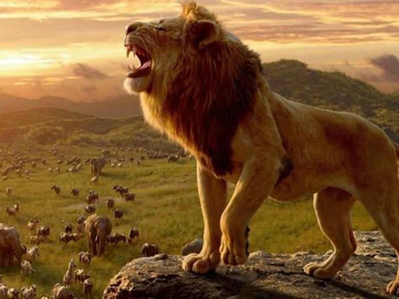 The Lion King Box Office : तीन दिन में 50 करोड़ पार, ऐसा करने वाली 2019 की दूसरी विदेशी  फिल्म