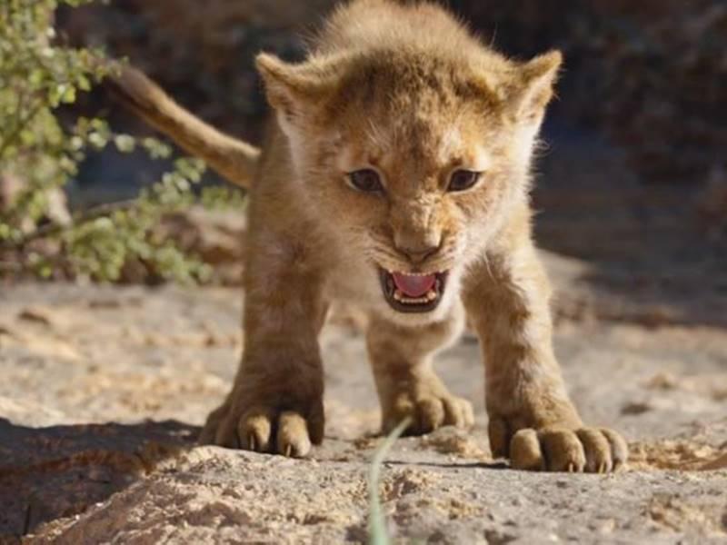 The Lion King Box Office : पहले शो में भीड़ कम लेकिन शाम को बच्चों के आने की उम्मीद