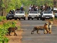 मध्यप्रदेश के टाइगर रिजर्व में अधिक संख्या में पर्यटन वाहनों को तत्काल रोकने के निर्देश