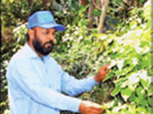 Bhopal Tree Man: इस एक बात ने बदल दी जिंदगी, अब तक लगा चुके चार लाख पौधे