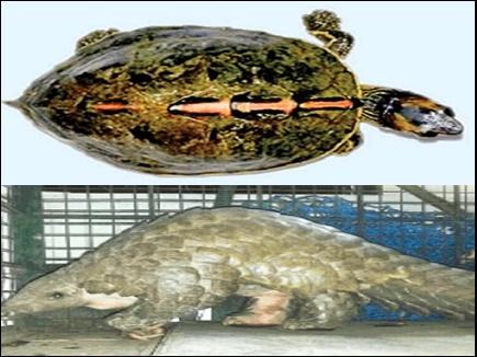 3 हजार में खरीदकर ढाई लाख में बेच देते थे चंबल का कछुआ