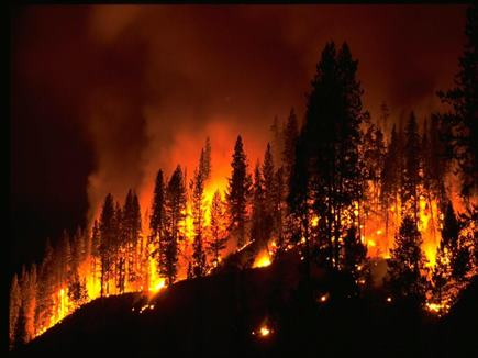 अमेरिका के जंगलों में लगी आग हुई भयावह, हजारों लोग प्रभावित