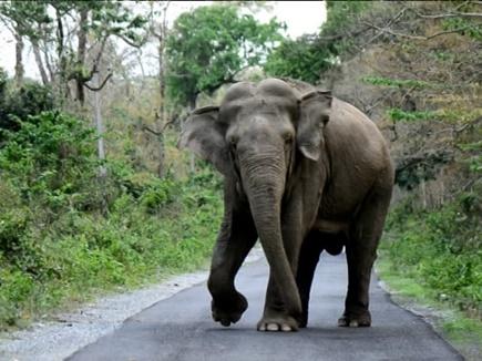 जंगली हाथियों पर काबू पाने के मास्टर प्लान पर लगी मुहर